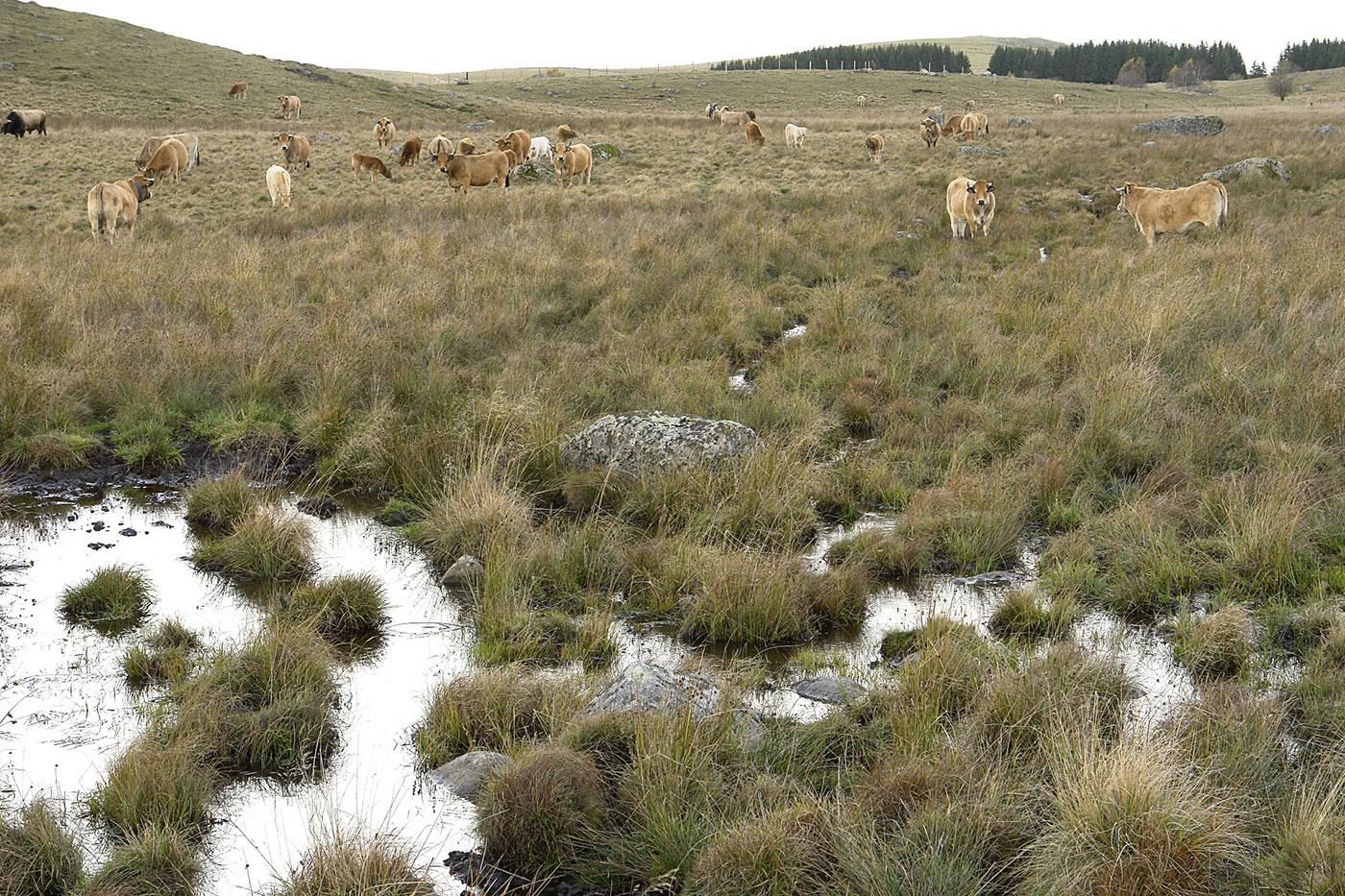 activité agricole pastorale